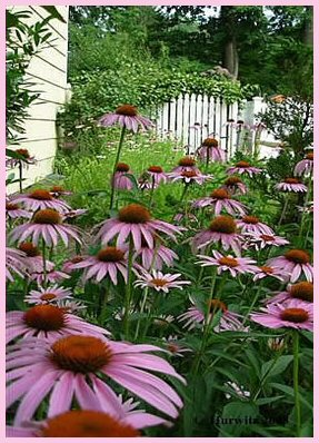 Butterfly Garden And Habitat Program