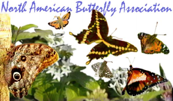 [Butterflies - North American Butterfly Association Home Page Graphic]
